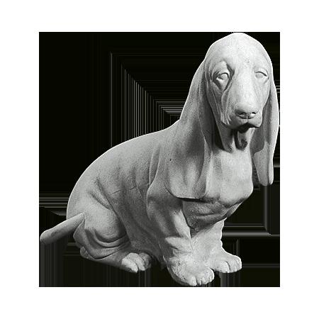 Basset hund dy976