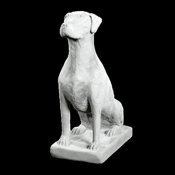 Hund dy981